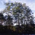 河原に立つ木